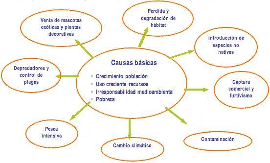 Resultado de imagen de causas perdida biodiversidad