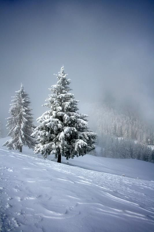 Winter in Bucegi mountains
