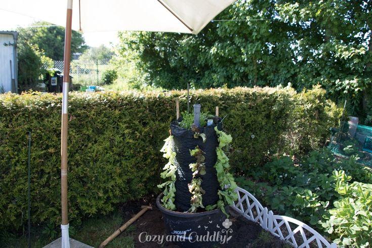 Schnecken Naturlich Bekampfen Salat Aus Dem Garten Im Salat Turm Anleitung Gemuse Anpflanzen Garten Blumenerde Kaufen