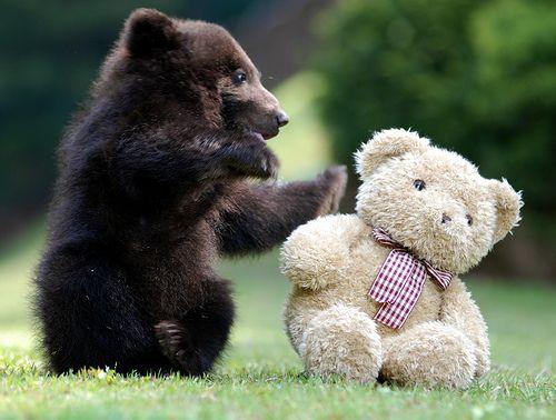 No I'M a bear!: Animals, Animal Baby, Black Bears, Bears Cubs, Teddy Bears, Bears Hugs, Baby Animal, Adorable, Baby Bears
