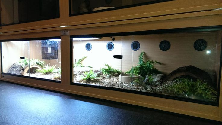 Paul 89s Blue Tongued Skink Enclosure - Reptile Forums UK ...
