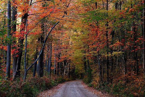 fall%20in%20michigan:%20The%20Roads,%20Fall%20Colors,%20Driving,%20Pictures,%20Michigan%20Fall,%20Color%20Tours,%20Sw%20Michigan,%20Pure%20Michigan