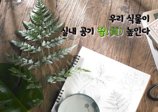 이런저런 읽을거리: 우리 식물이 실내 공기 질(質) 높인다