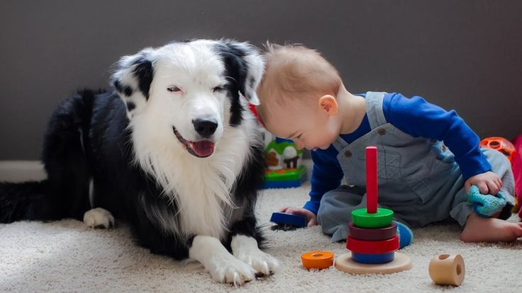 News Videos & more -  Watch the Funniest Videos on youtube - Border Collie Playing with Baby Child - Funny Videos of Dog and Baby #Funny #videos on #youtube #Music #Videos #News Check more at http://rockstarseo.ca/watch-the-funniest-videos-on-youtube-border-collie-playing-with-baby-child-funny-videos-of-dog-and-baby-funny-videos-on-youtube/