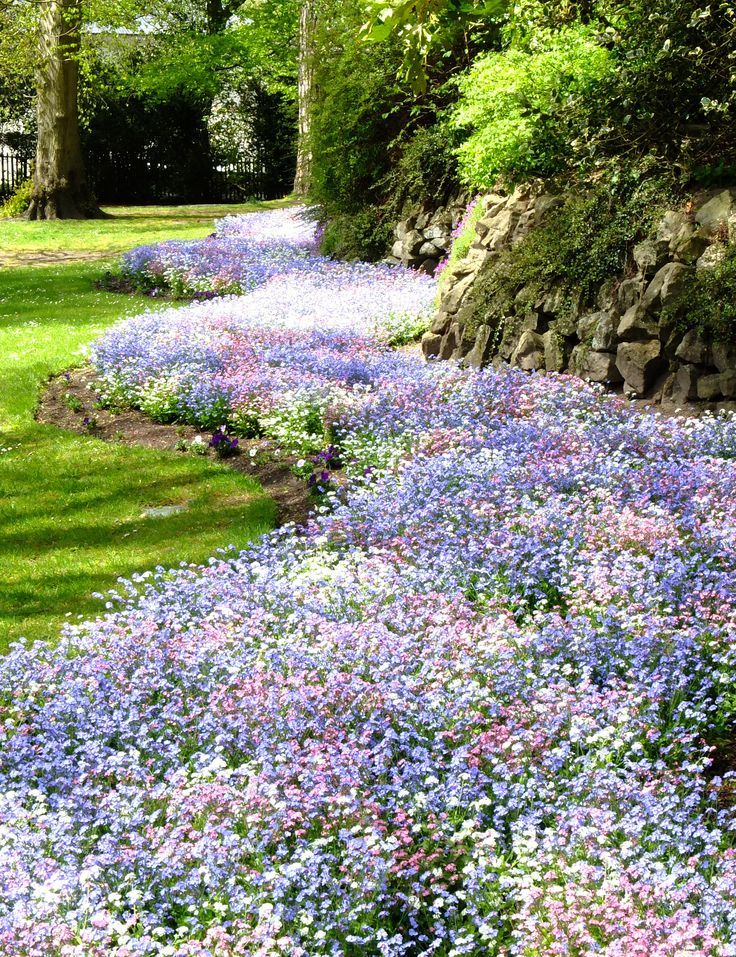 Forget-me-nots. The most delicate, perhaps, but together they leave quite an impression.
