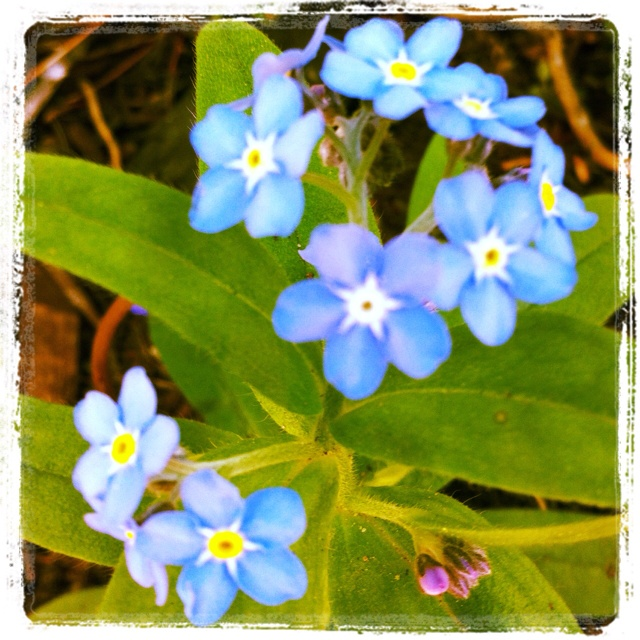 May Garden -- Day 13