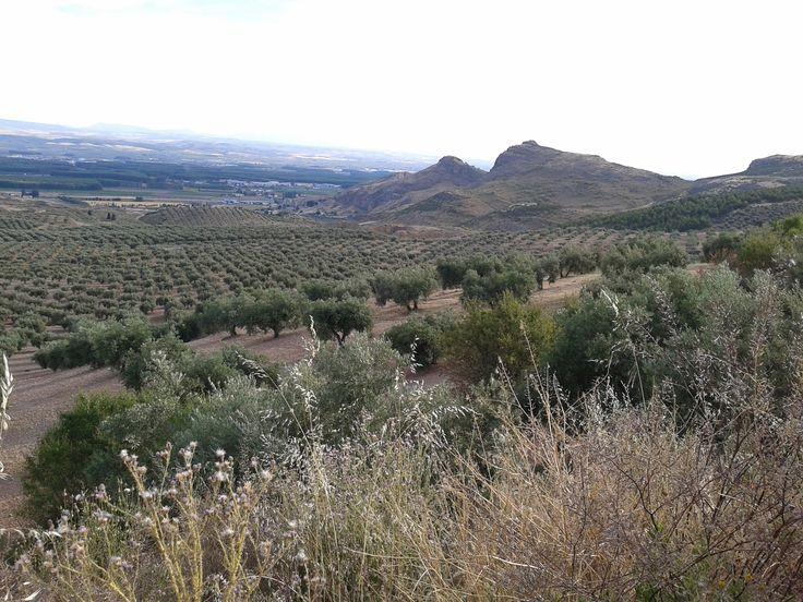 Vistas desde La Moleona