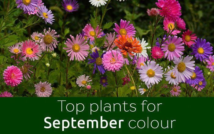 Food Tips In Malayalam Foodplatingtips Gardeningtipstexas Plants September Flowers Flower Planting Guide