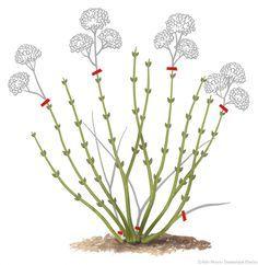 comment tailler un hortensia ? #lesbonsgestes