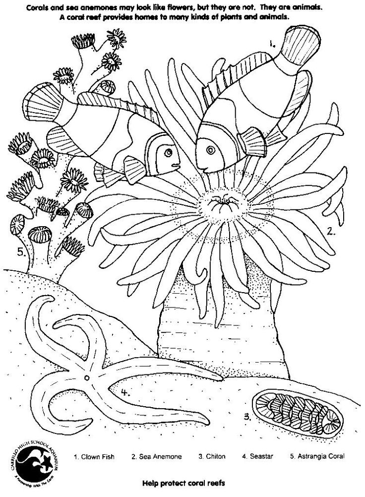 Simple Coral Reef Coloring Pages