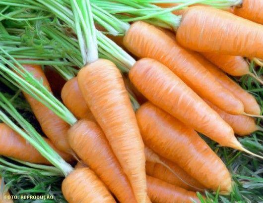 A Cenoura é largamente processada pela indústria para a elaboração das versões em cubo, ralada, em rodelas e mini Cenouras, inclusive como ingrediente de conserva de seleta de legumes, alimentos infantis e sopas instantâneas.