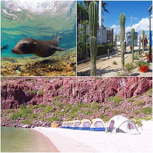 【blueandsnow】さんのInstagramをピンしています。 《#ラパス メキシコ #バハ・カリフォルニア半島にあるダイビングエリア ダイビングでアシカと遊べるのが一番の魅力✨✨✨ ジンベエザメ、ハンマーヘッド、ナイトダイビングでモブラの大群と大物が多い‼️ 8~10月は水温も上がり、いろいろな生物 が見られるベストシーズンです ライセンスを取得していきましょう(^_^)v  #ダイビング #海 #ダイビングインストラクター #東京 #神奈川 #横浜 #渋谷 #下北沢 #世田谷 #葛西 #沖縄 #海外 #離島 #シュノーケリング #スキューバダイビング #体験ダイビング #潜水 #セブ #メキシコ #diving #ハワイ #リゾート #グアム #ブルーアンドスノー #ロンハーマン #リゾート #絶景 #メキシコ》
