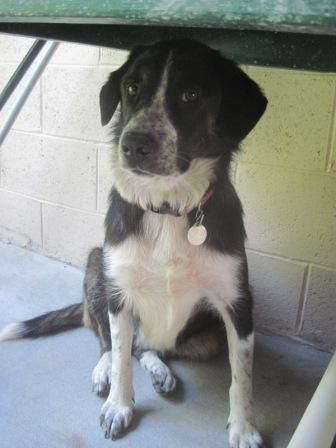 11/16sl♥♡♥♡■■■■■01/09/15-Thelma is an adoptable Border Collie Dog in Milford, PA Mostly black with some white and brown, this laid back 3 year old medium sized border collie m ... ...Read more about me on @petfinder.com