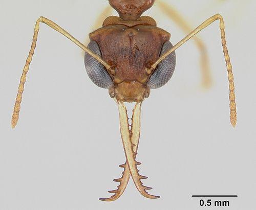 Pred písaním tohto článku som chvíľku pátral po odkazoch na mravce v rámci sme-čka. Vcelku ma prekvapilo množstvo rôznych blogov, ktoré sa spájali s mravcami aspoň názvom. Potvrdilo sa teda, že o…