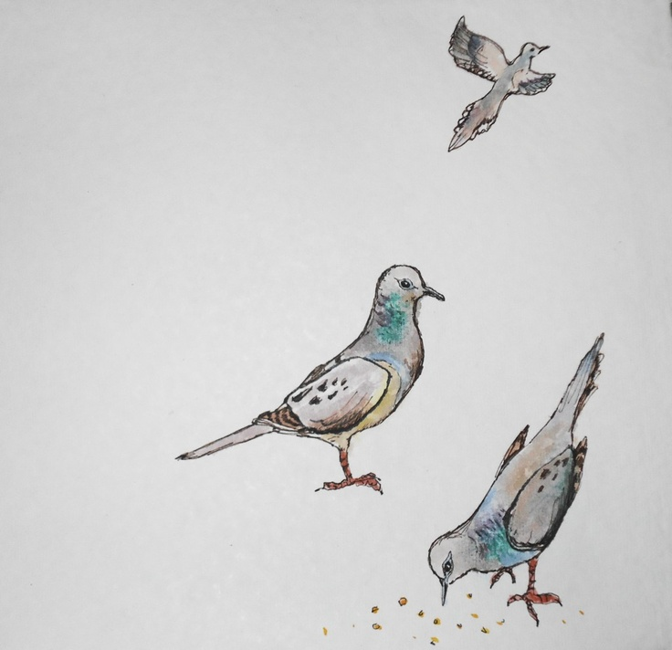 50 best our dove community images on pinterest birds for Mourning dove tattoo
