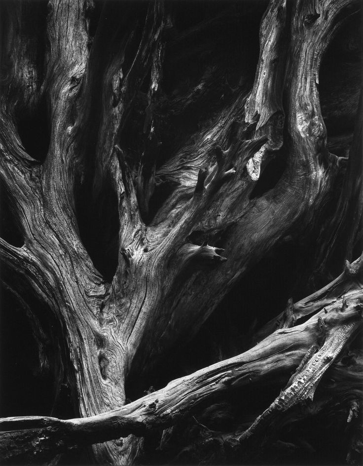 "Ansel Adams ""Unknown""  I love the way he captures the light that hits the tree."