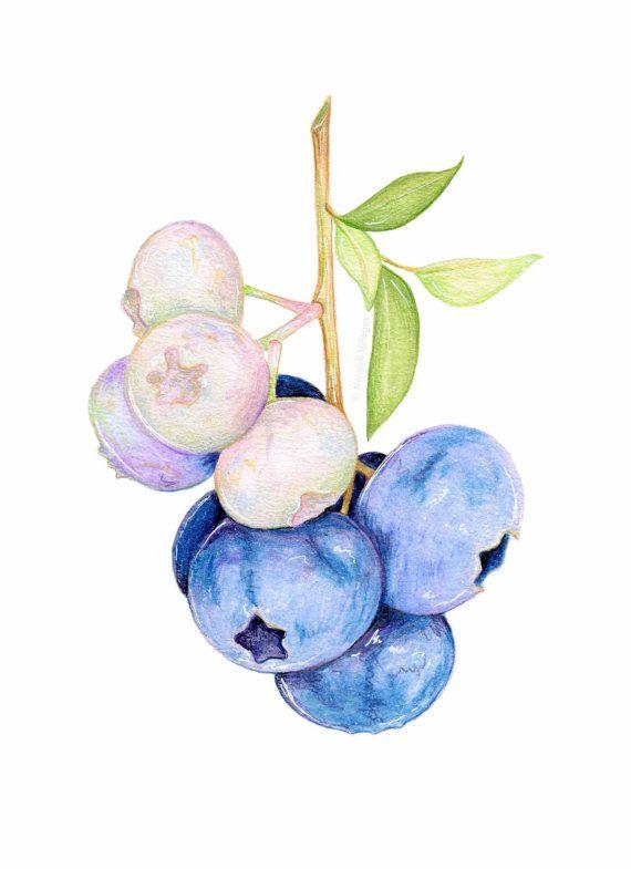 Mirtilli sul ramo / / illustrazione botanica / / stampa archivio arte, viola, estate, frutta