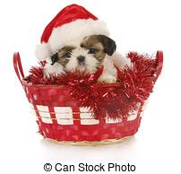 kerst puppie shih-tzu                                                                                                                                                                                 More