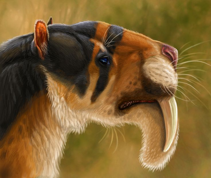 Thylacosmilus atrox by *viergacht on deviantART | A South American sabertooth-lookalike, Thylacosmilus was in fact a marsupial - at roughly the size of a jaguar, one of the largest marsupial carnivores. | via Paleoillustration