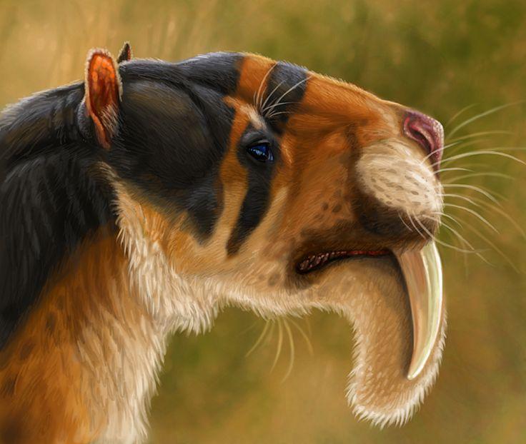 Thylacosmilus atrox . Un diente de sable- sudamericano, Thylacosmilus era, de hecho, un marsupial - por lo menos el tamaño de un jaguar, uno de los mayores carnívoros marsupiales.