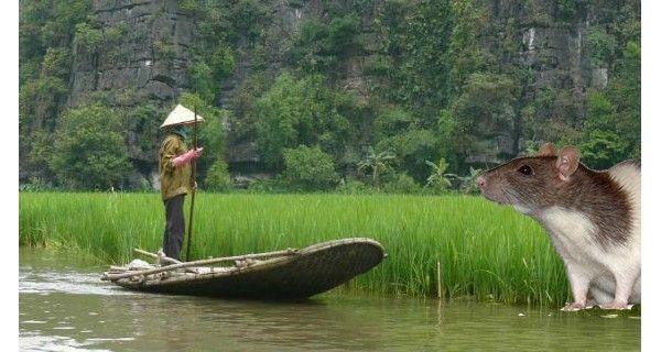 Vietnam es reconocido por ser el rey de la exportación de camarones, por ser el segundo vendedor mundial de café y el tercero de arroz. Sin embargo, en el