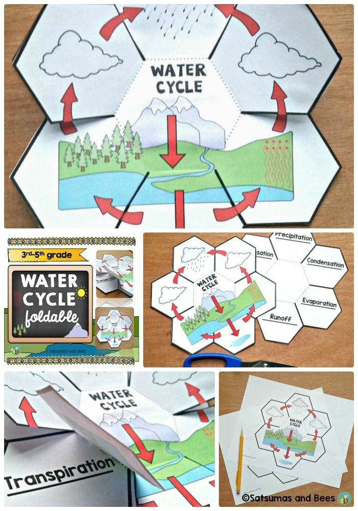 This foldable will help your students identify and remember the steps of the water cycle. This resource may be used with students from 3rd grade to 5th grade. Perfect with whole group, small group or individual instruction. This resource is adapted to address different learning styles and was tested in my classroom (4th-5th grade).