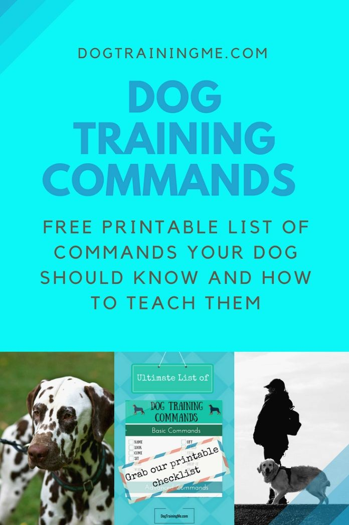 How To Make That Unruly Dog Your Best Friend Dog Training