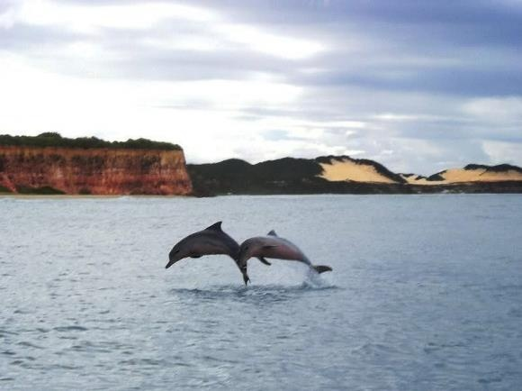 Golfinhos na praia de Pipa - RN - Brasil