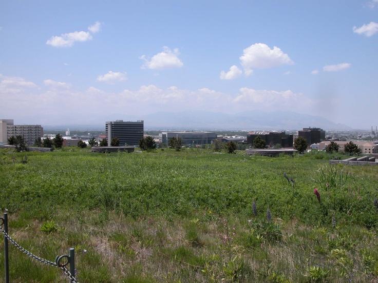 Spreading meadow. Rooftop garden - Salt Lake City.