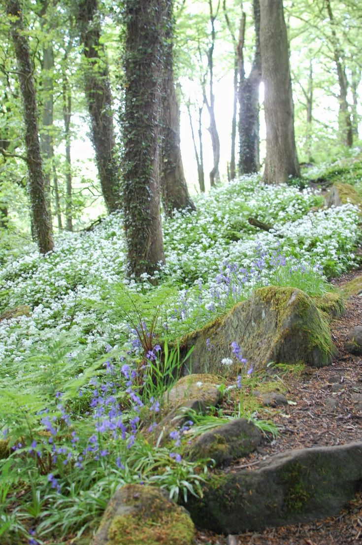Hannah Nunn: Wild Woods. Beautiful bluebells & wild garlic fill the air....