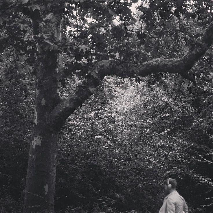 #claphamcommon #trees #headphones