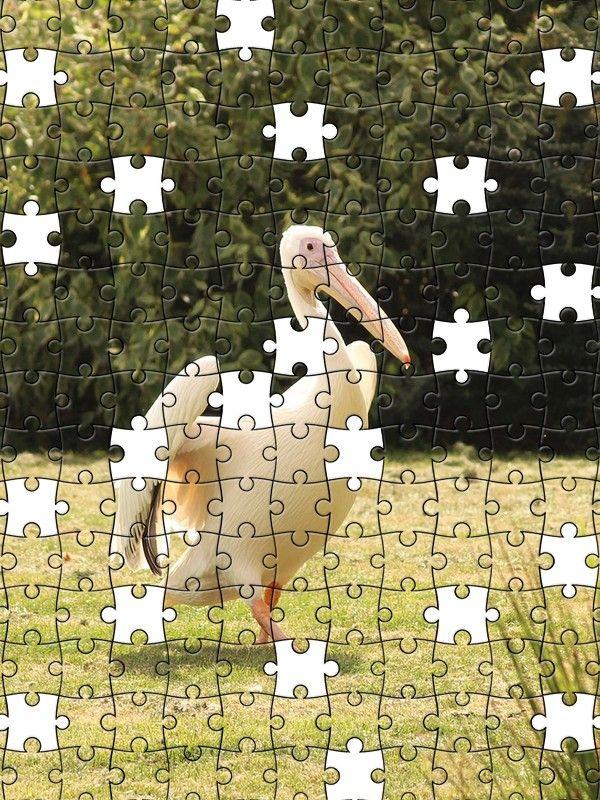 Free Jigsaw Puzzle Online - Pelikan
