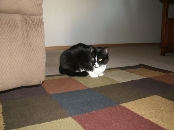 Craigslist Missouri Springfield Mo Pets - Pets and Animal ...