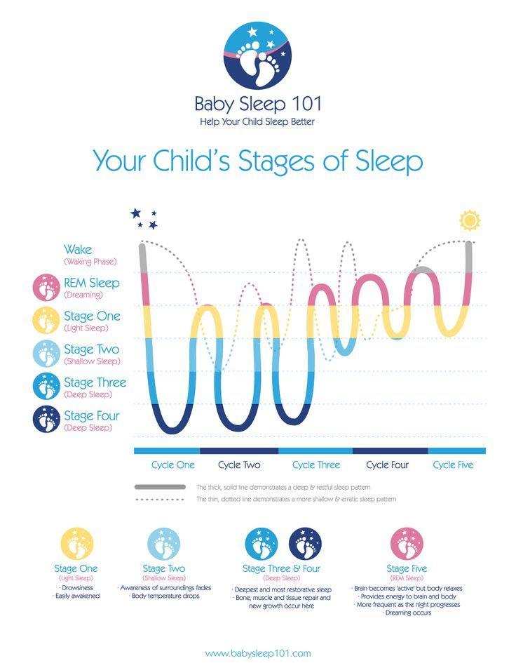 Sleeping through the night | Baby sleep cycles, Sleep ...