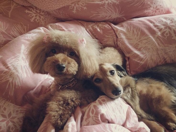My sweeeeeeet pets♡♡