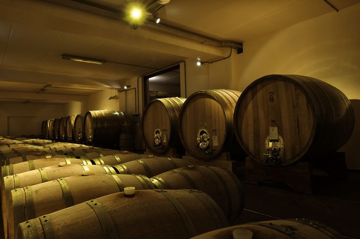 Visit at Josetta Saffirio Wines Cellar