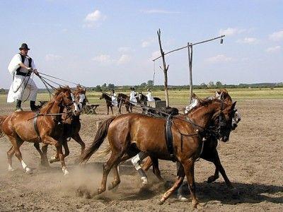 Visite des steppes: Découvrez le monde des steppes hongroises! - 64 EUR