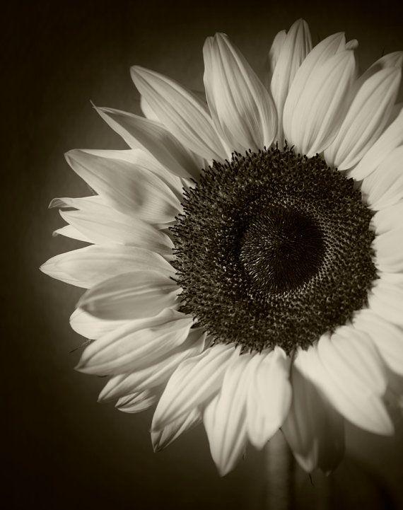 14 best Black n white sunflower images on Pinterest ...
