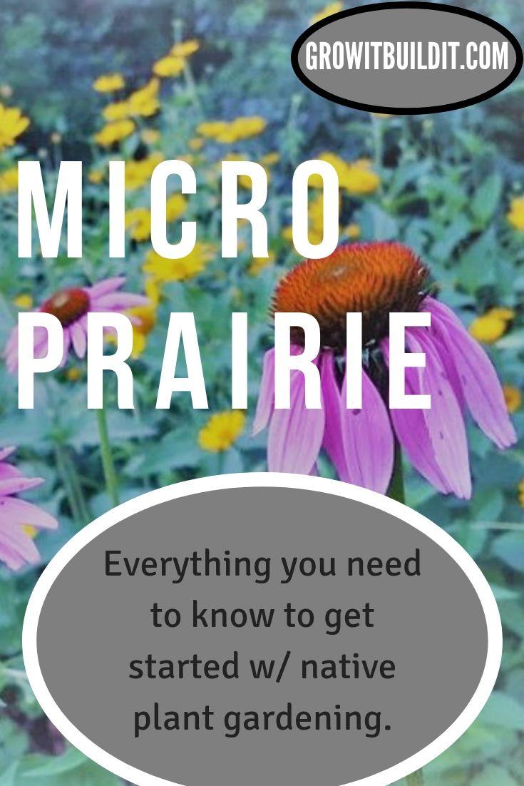 Start Your Own Micro Prairie Gardening For Beginners Native Plants Native Plant Gardening