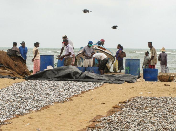 Fischmarkt in Negombo, Sri Lanka (3)