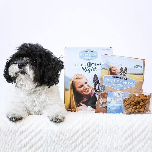If you claimed a @purina Puppy Chow® Natural (plus vitamins & minerals) Puppy kit, it's feedback time! We'd love to hear how your pup started the 1st year right with this sample 🐶 ~ Please remember to acknowledge that you received a free sample in your response by including #PINCHmeFreeSample