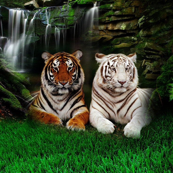 white tiger is it really endangered essay Free essays on endangered species endangered species: bengal tiger critically endangered birds white-cheeked.