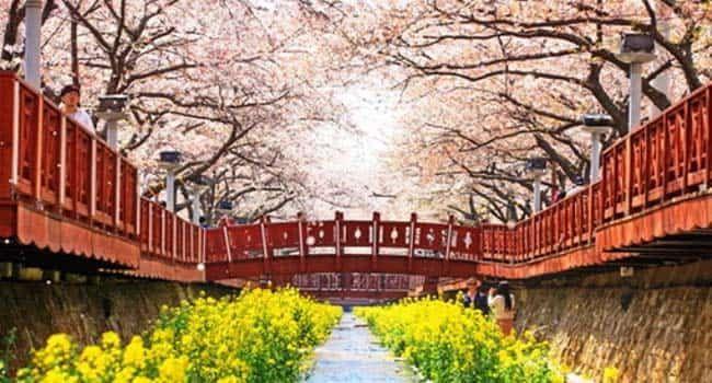 Jinhae - Tempat Wisata Di Korea Selatan yang Paling Populer