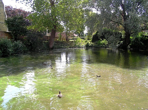 Carp Pond - Arreton Old Village - Isle of Wight