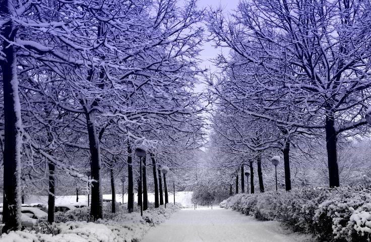 snow covered forest desktop background wallpaper free