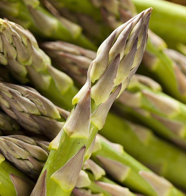 How to Grow Asparagus from Seed or Crowns