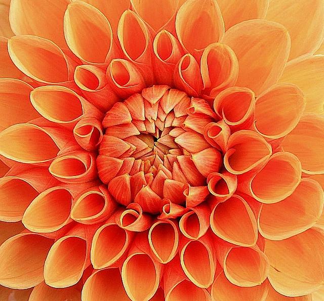 Oranje bloem, must have voor in een oranje interieur