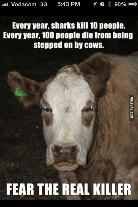 A hardcore cow.