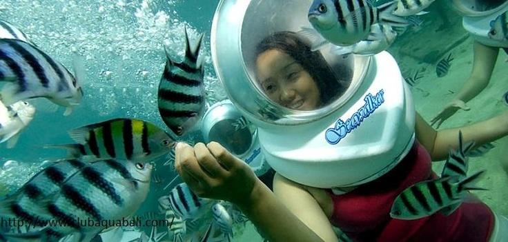 Berinteraksi secara langsung dengan makhluk laut di #Bali dengan Bali Sea Walker. Cek paketnya. (Interact directly with some cute sea creatures in #Bali with Bali Sea Walker. Get the deal now.)