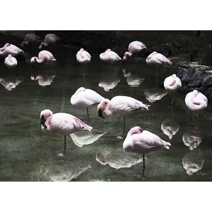 Flamingos poster, 50x70 – House Of Beatniks – Kjøp møbler online på Room21.no